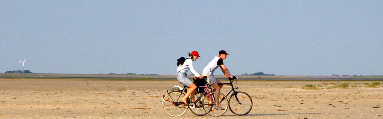 Camping Silbermöwe: Fahrradfahren in St. Peter-Ording